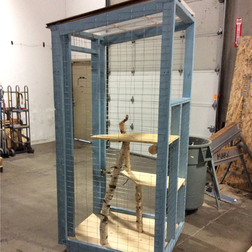 Diy Cool Cat Catio For Under 50 Portland Metro And
